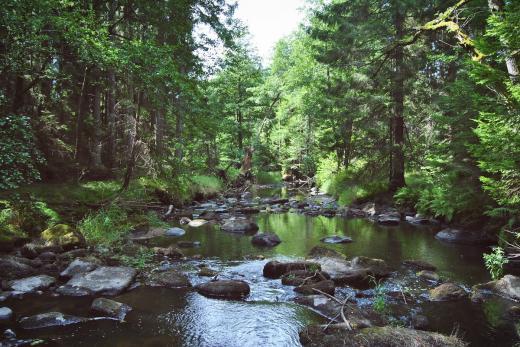 Přírodní rezervace Dračice v České Kanadě