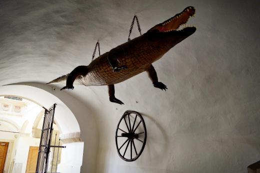 Brněnský drak podle dostupných pramenů patří k Brnu už od 2. poloviny 16. století. Jak se do Brna dostal dnes nikdo s jistotou neví, ale pověstí o jeho původu je spousta.
