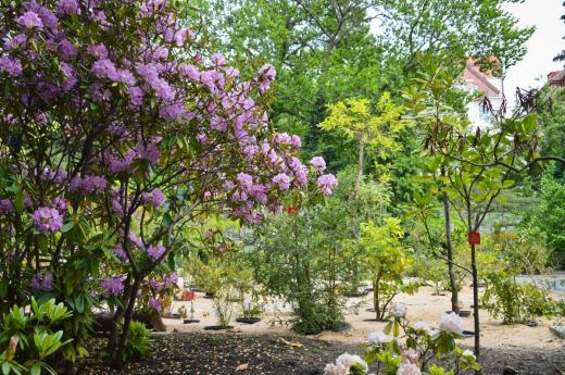 Botanická zahrada UK