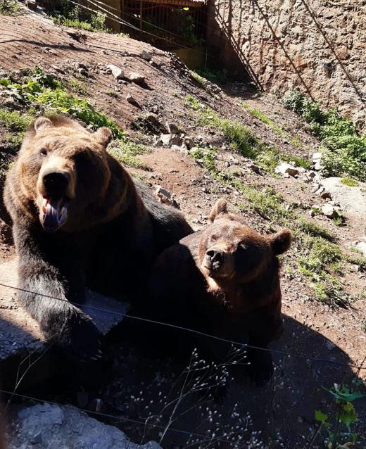 Medvědí rodinka na Točníku