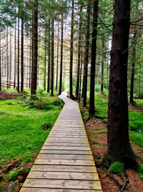 Národní přírodní rezervace Rejvíz