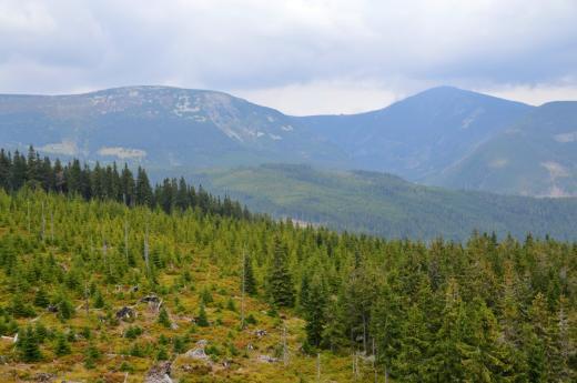 Rozhledna Hnědý vrch