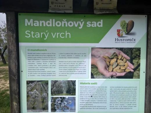 Rozhledna Mandloňové sady