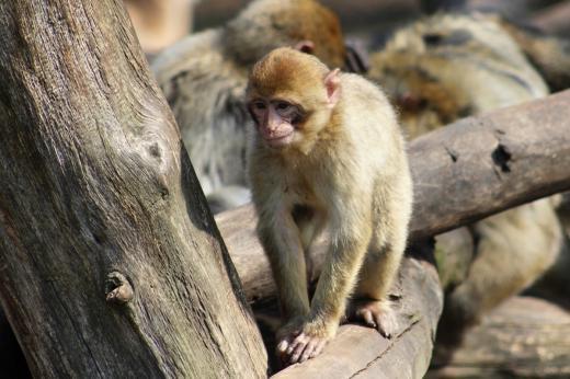 Skanzen a zoopark Stará Ves