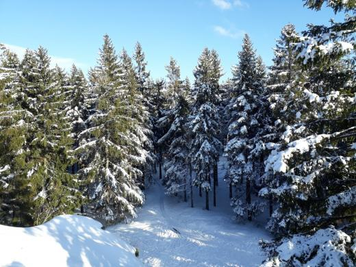 Zimní pohled z Janovy skály dolů na přístupovou stopu